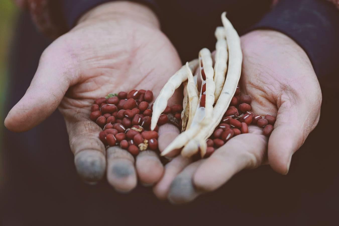 台灣紅豆總產值約新台幣7.8億。