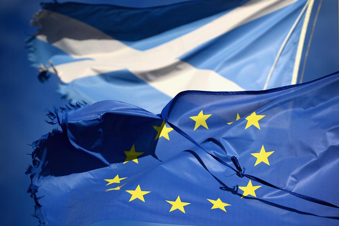 歐盟旗幟和聖安德魯十字旗。