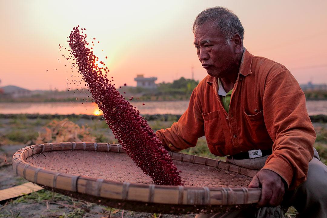 啟尚哥將紅豆篩選分類。