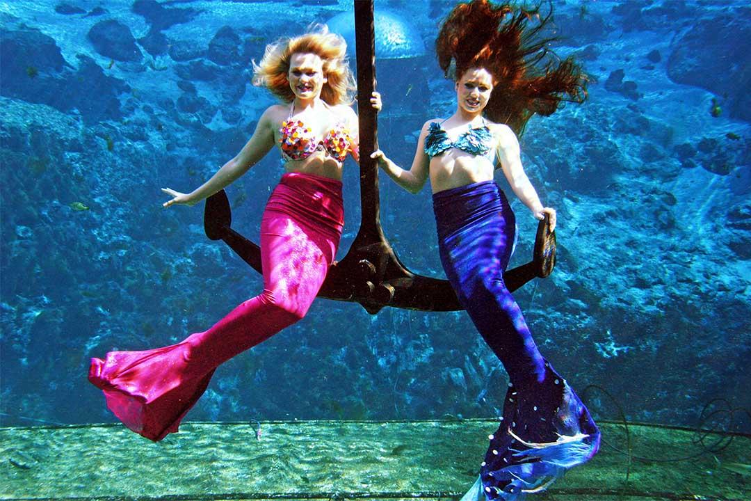 美國佛羅里達州,一個國家公園裡的專業美人魚。