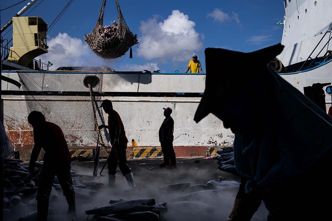 大型台灣籍遠洋漁船多集中在高雄前鎮,工人正在搬運從遠洋漁船得來的漁獲。 攝:Billy H.C. Kwok/Getty