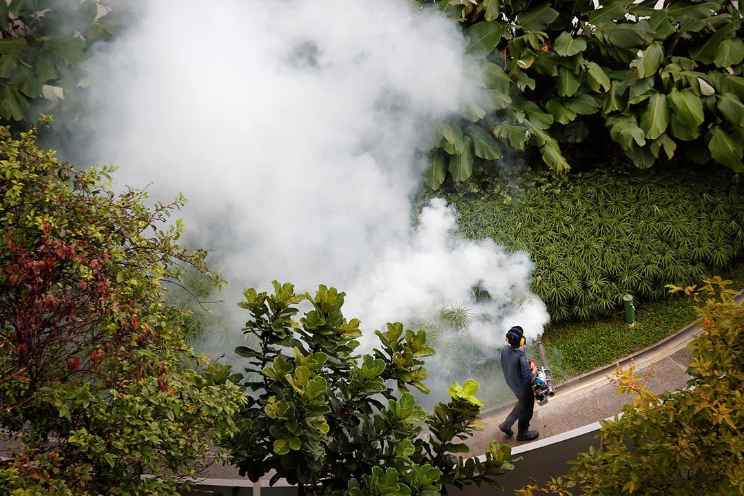 圖為新加坡一個花園工作人員在噴灑滅蚊藥物。