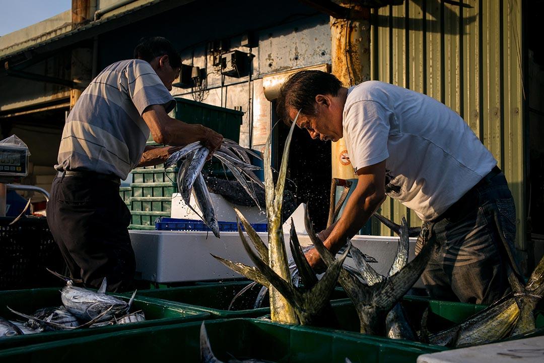 魚市場內漁民正忙著理貨,分類裝箱,載往各地販售。