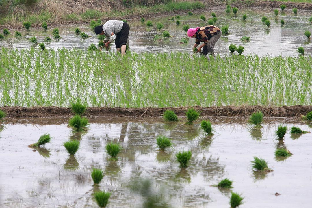 中国江苏省农民在耕种。