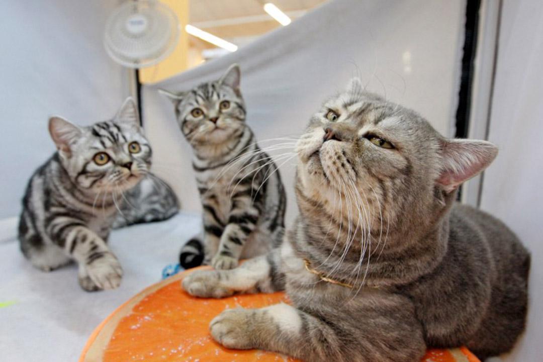 科學家在30處考古位址檢測DNA,推測出貓是如何散布至全球。