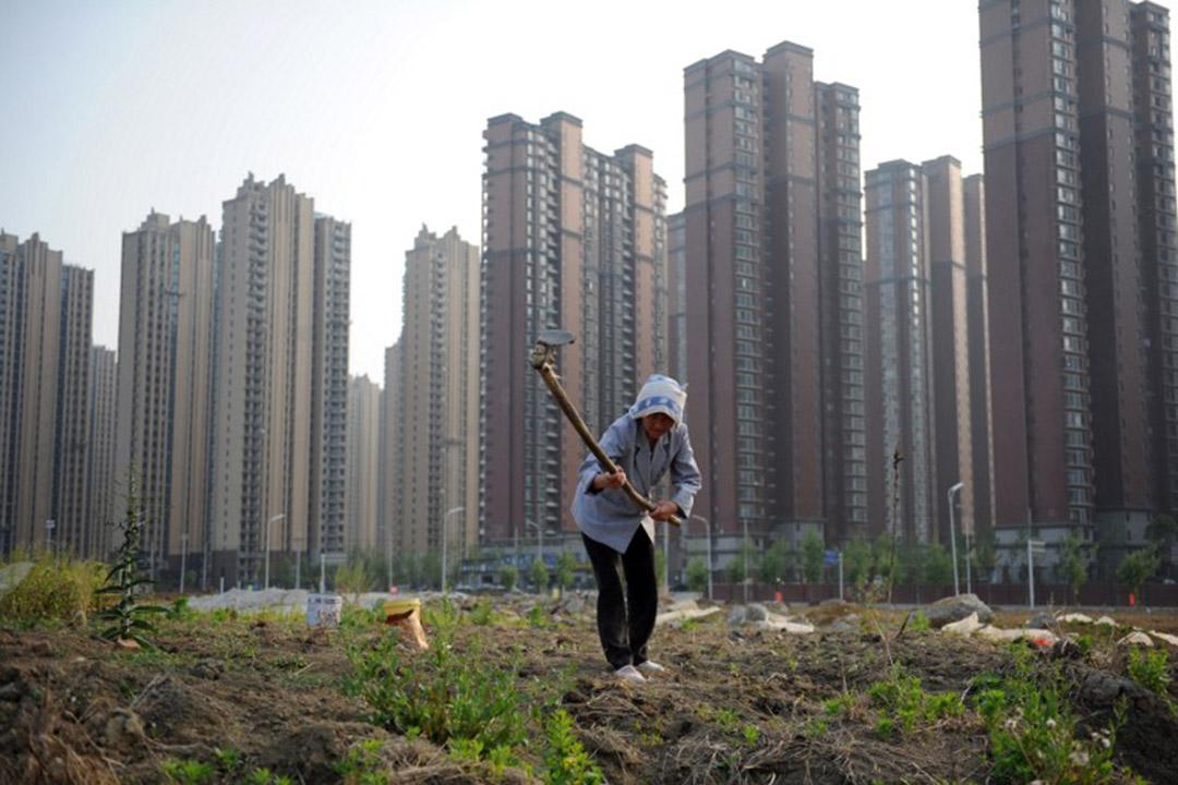 中國安徽省合肥,一名女農民在大型住宅項目旁耕種。