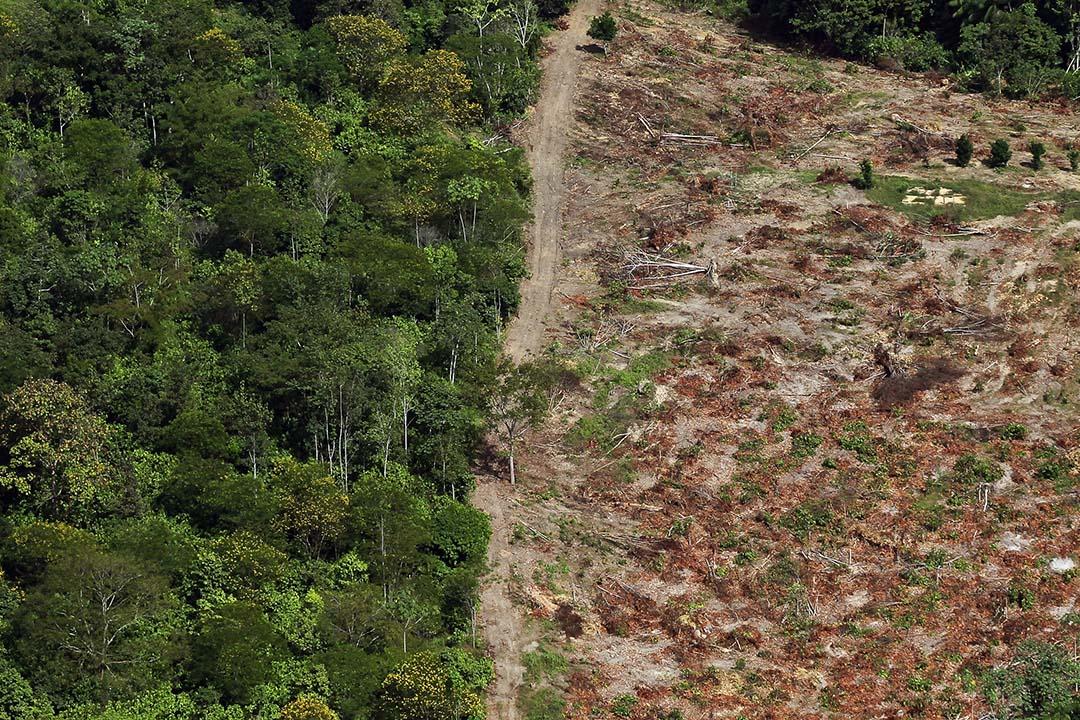 巴西亞馬遜森林。
