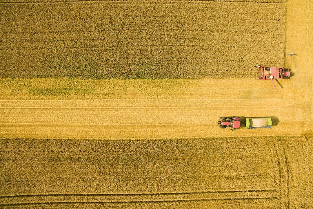 有研究指出氣候變化將影響全球農作物供應。