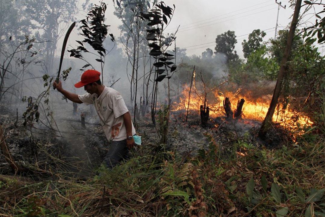 研究指印尼森林火災產生的毒霾可能已造成東南亞10萬人死亡。圖為2014年3月3日,印尼杜邁,一個居民嘗試撲熄森林內的火種。