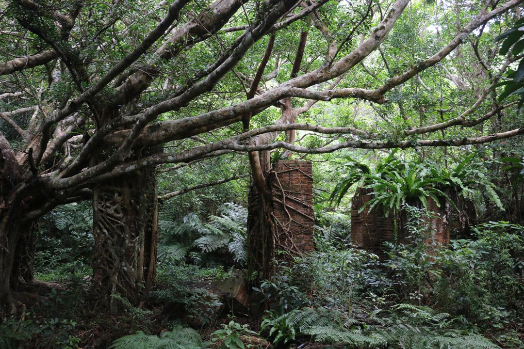 西表島上的煤礦遺址是早期台灣人在島上開墾的見證。