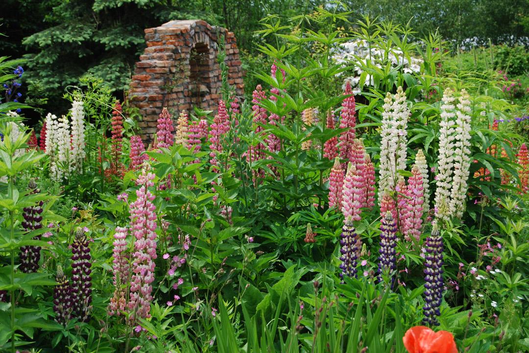 在本州依序開花的植物,在北海道卻集中在短期間一起盛放,所以北海道的花季特別華麗。