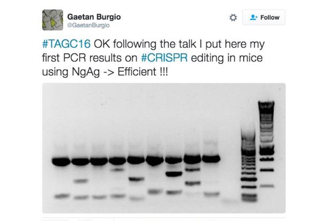 7月15日,澳洲科學家Gaetan Burgio在推特上貼出重現實驗成功的圖片,後經過測序發現是誤讀。
