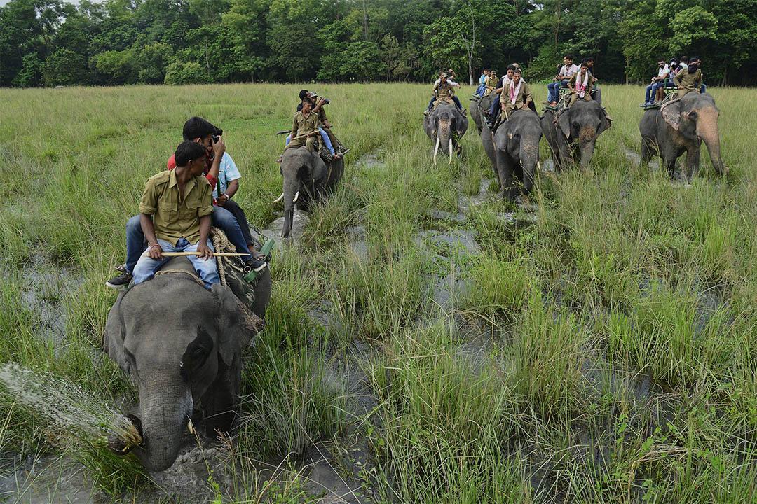 Trip Advisor 禁止銷售涉及虐待動物的景點門票。圖為印度一個野生動物保護區裡,遊客騎著大象參觀。