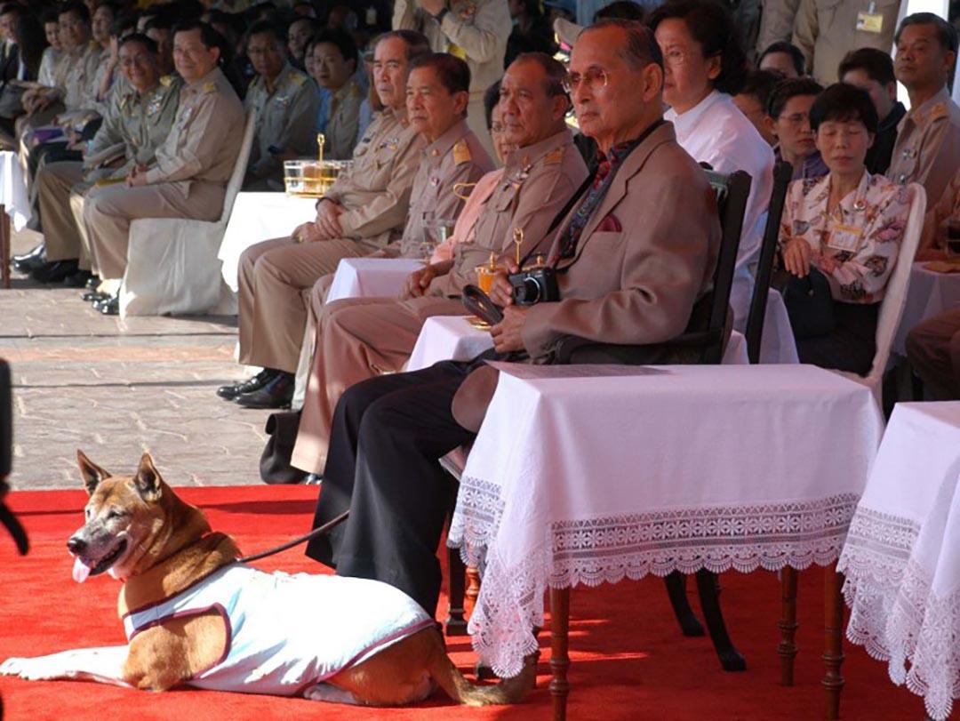 普密蓬與其愛犬通丹(Tongdaeng)出席一個划船比賽。