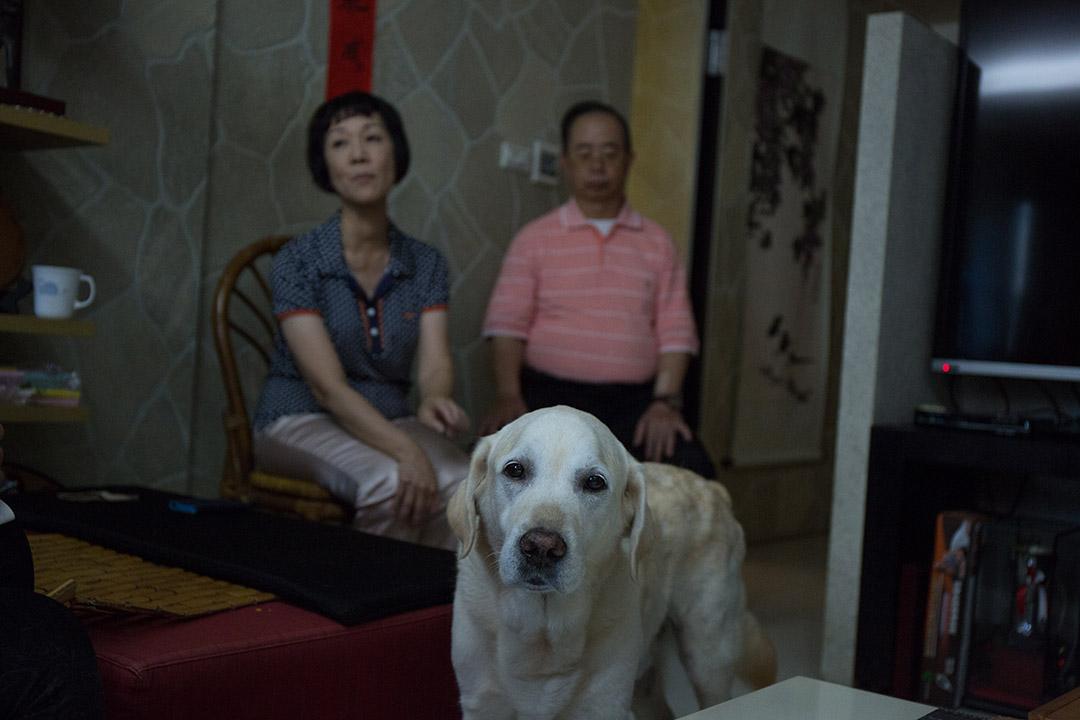 為幫助台灣視障者,出生於2006年1月21日的Dano,被日方選中來台交流。