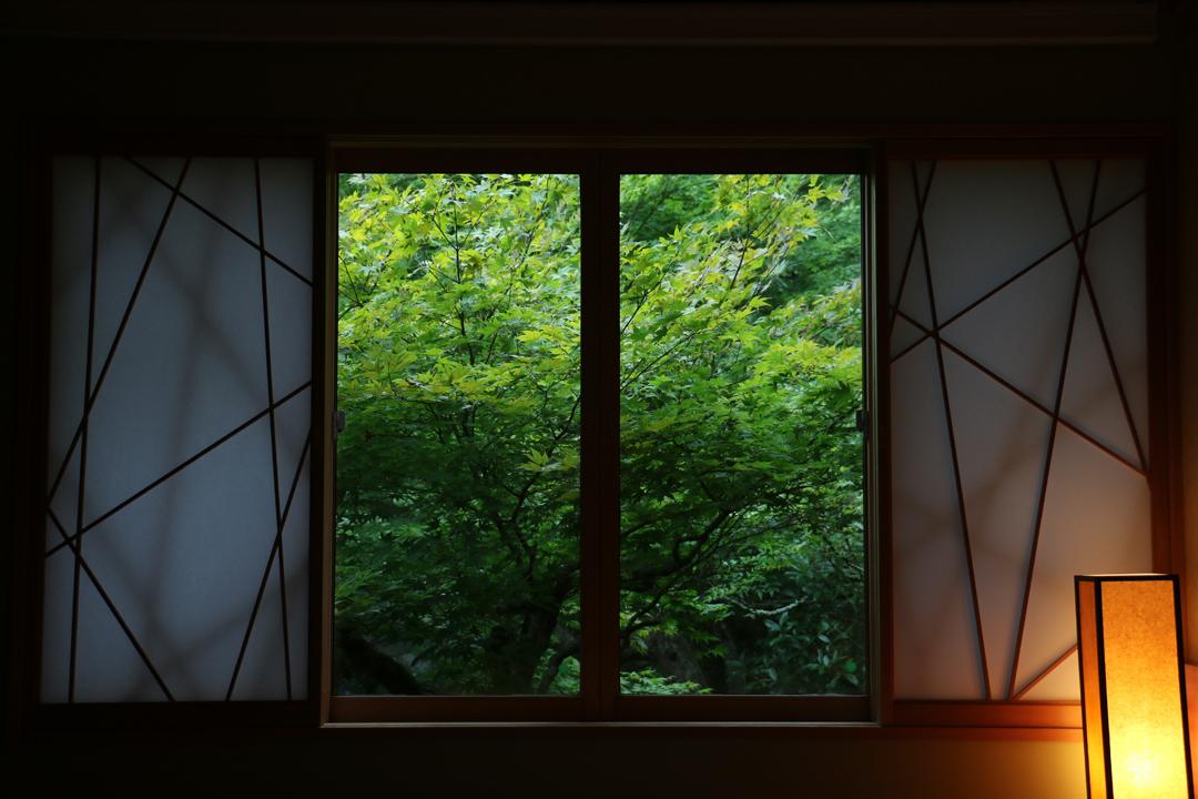 被綠意包圍的房間,其實刻意放低了窗戶。