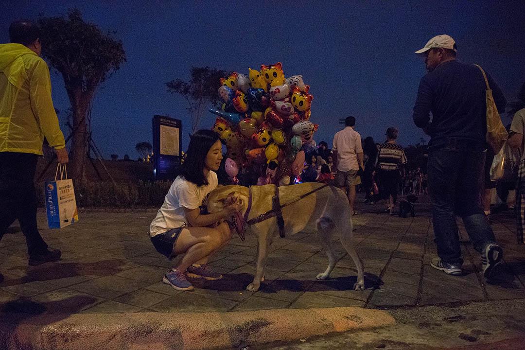 訓練師陳藝文訓練狗兩年多,帶出4隻「學生」。