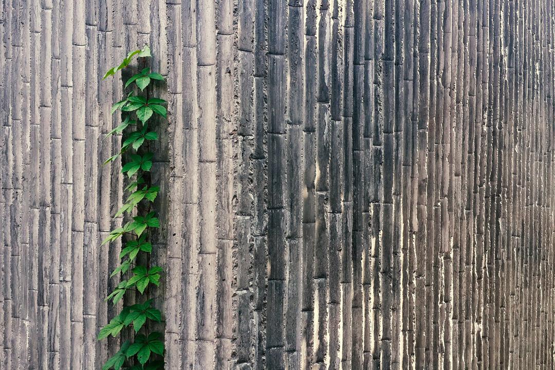 鄣吳鎮的竹模版清水混凝土外觀效果。
