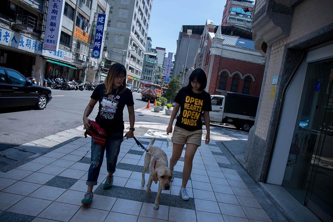 Force去年9月已經去高雄上學了,現在Force媽暫時帶了另一隻寄宿的狗。