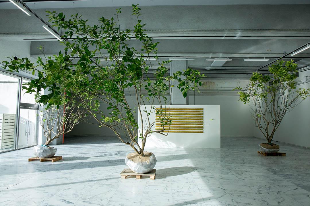 黃博志個展《五百棵檸檬樹:有機檔案》現場。
