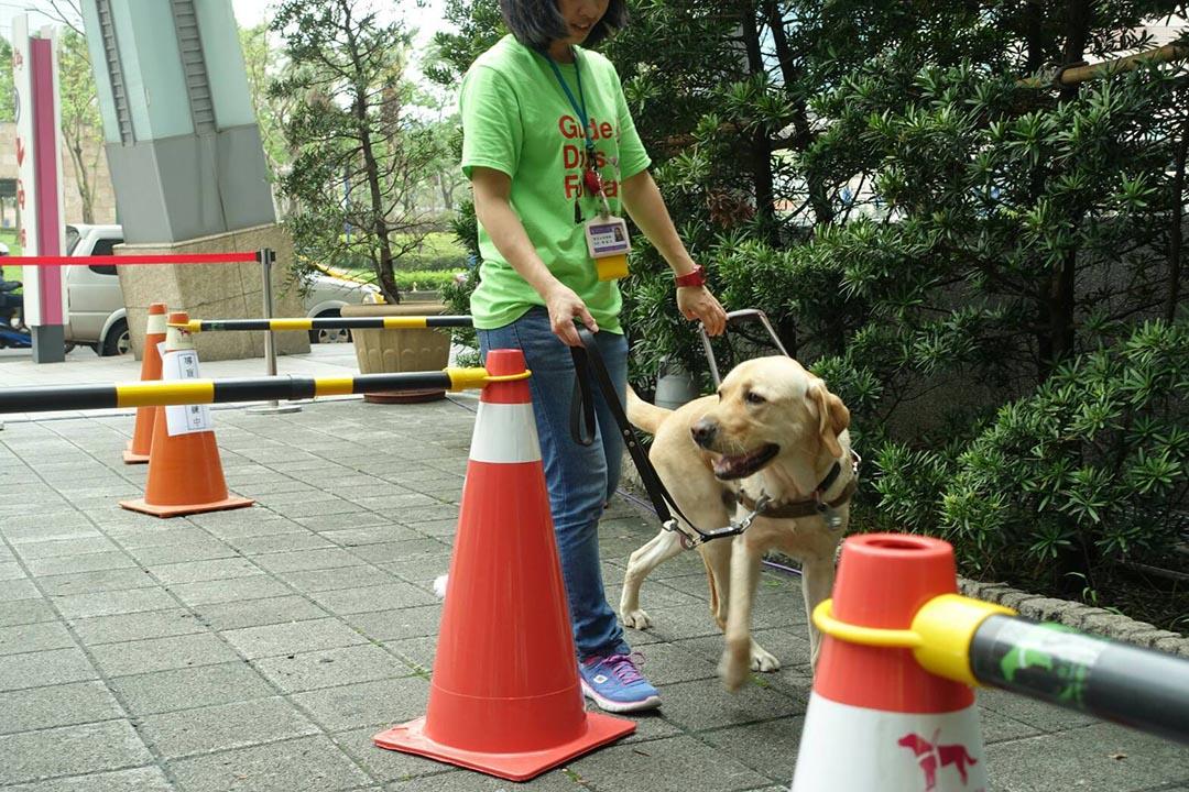 導盲犬進行躲避障礙物的練習。