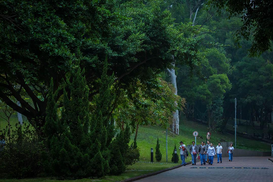 青山醫院的職員沿小徑走回醫院。