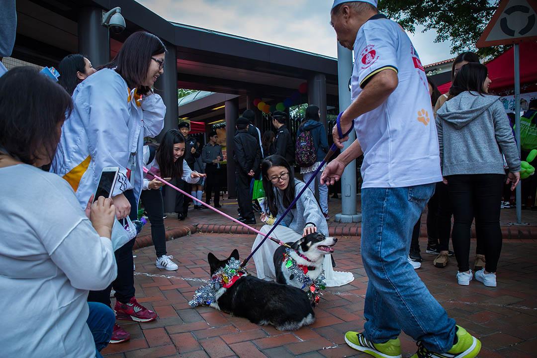訪客與狗醫生拍照。