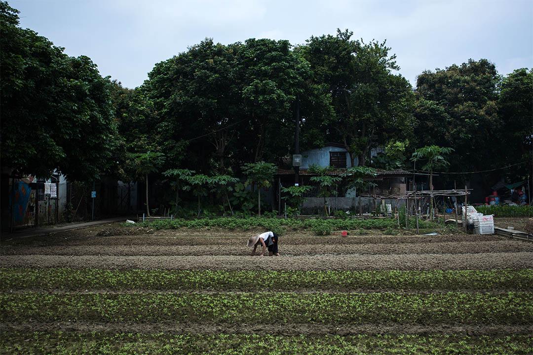 圖為粉嶺馬屎埔一幅農地。