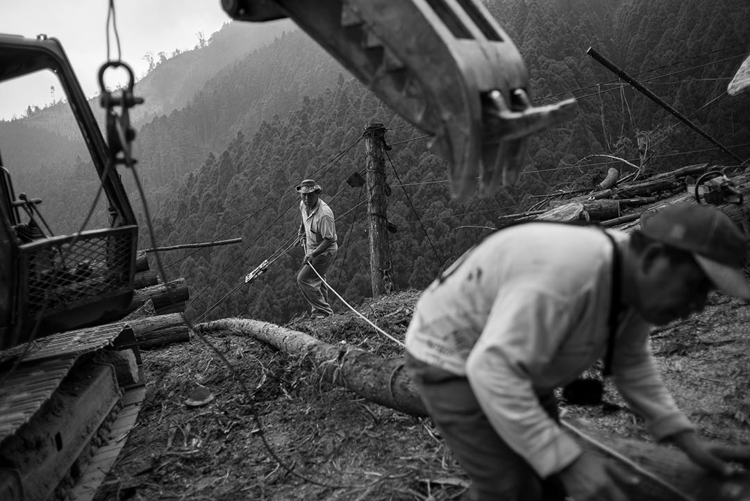15年前,台灣還有1250家鋸木廠,現在只剩160幾家,內部工作人員平均年齡55到60歲。