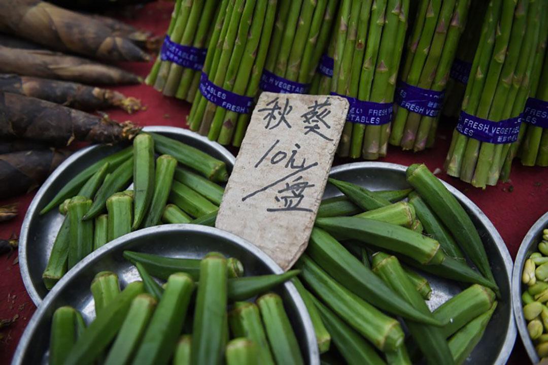 形似青色辣椒的秋葵被冠以「糖尿病剋星」、「植物黃金」、「綠色偉哥」等稱號。