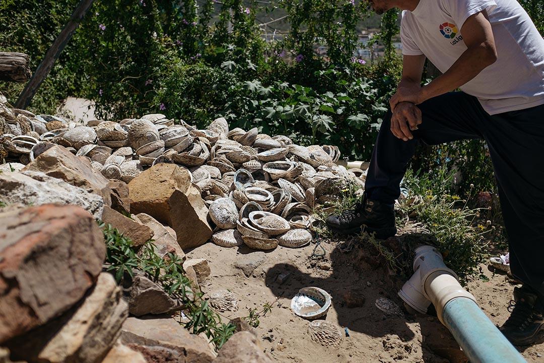 Louis在屋外的後園,向記者展示他和同伴近一周的工作後所遺下的一地鮑魚硬殼。