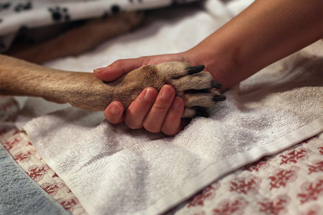 2017年2月6日開始起,台灣政府轄下的動物之家將不能再為流浪動物進行「安樂死」。