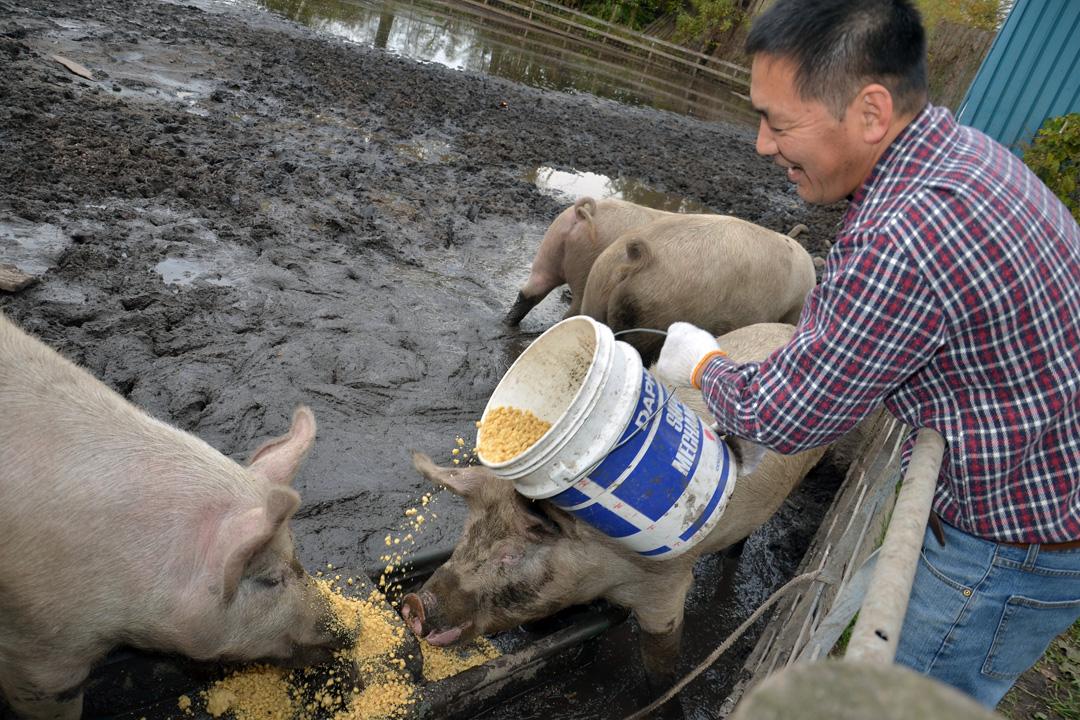 「地域生產、地域消費」是老闆野中健治秉持的基本原則,甚至為了安全又好吃的肉而開始養豬。