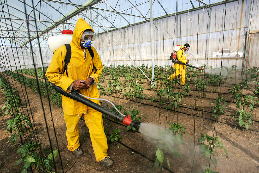 聯合國指出每年有20萬人死於農藥中毒。圖為農夫噴殺蟲劑以減輕害蟲破壞農作物。