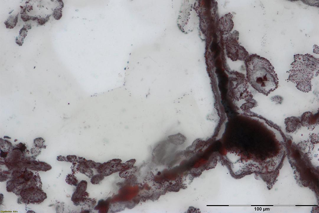 微生物化石同現代微生物類似。