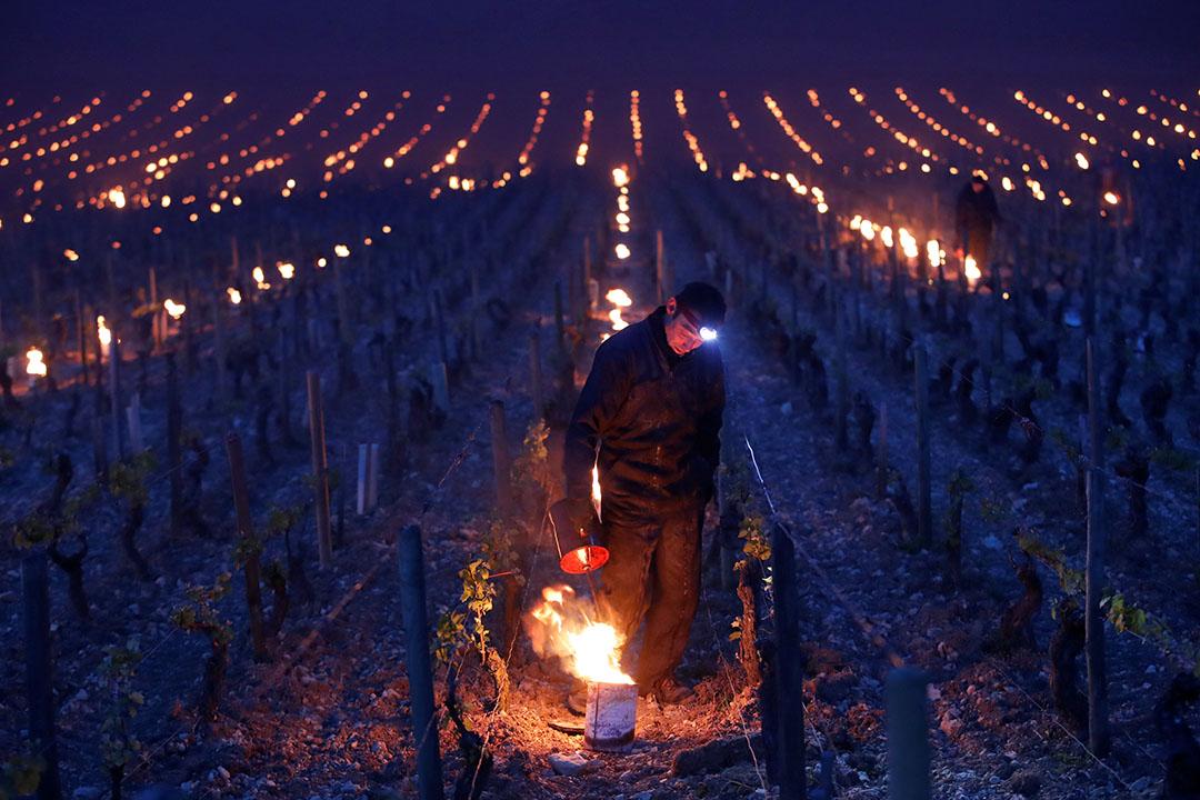 2017年4月28日,法國夏布利,清晨時份,葡萄酒園的種植工人以發熱燈為農作物加熱,以免農作物被霜凍影響。