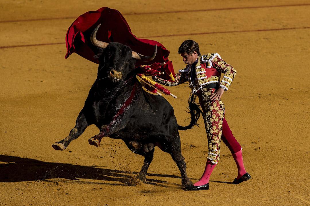 2017年5月1日,在西班牙塞維利亞舉行的April's Fair的第二天,在La Maestranza鬥牛場上,正舉行人與牛斗的表演。鬥牛是西班牙最著名的文化傳統之一,亦是最惹爭議的其中一項傳統活動。反對鬥牛的人狠批這種活動殘忍、野蠻,極不人道。支持者認為鬥牛是一種傳統藝術,有必要保留。