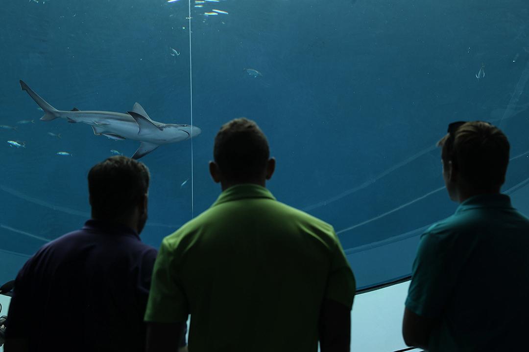 2017年5月8日,人們在邁阿密科學水族館展覽開幕當天觀看鯊魚。