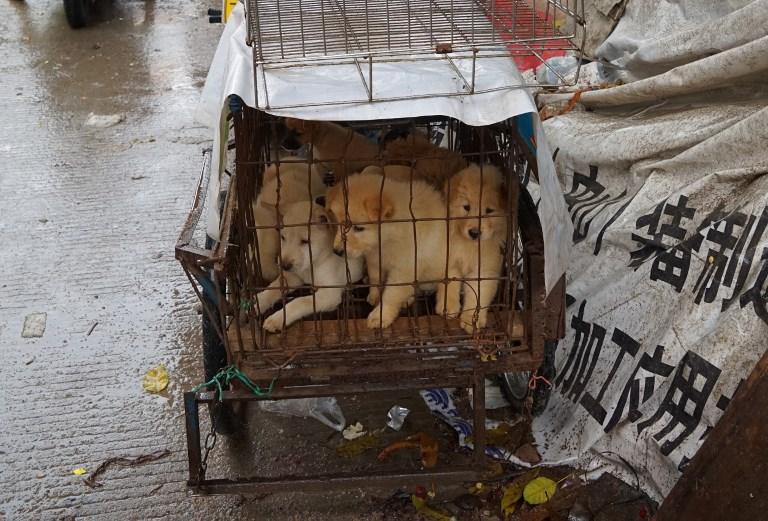 在政府施加壓力下,廣西玉林民間在昨日夏至仍然如期舉行「荔枝狗肉節」。 攝:STR / AFP