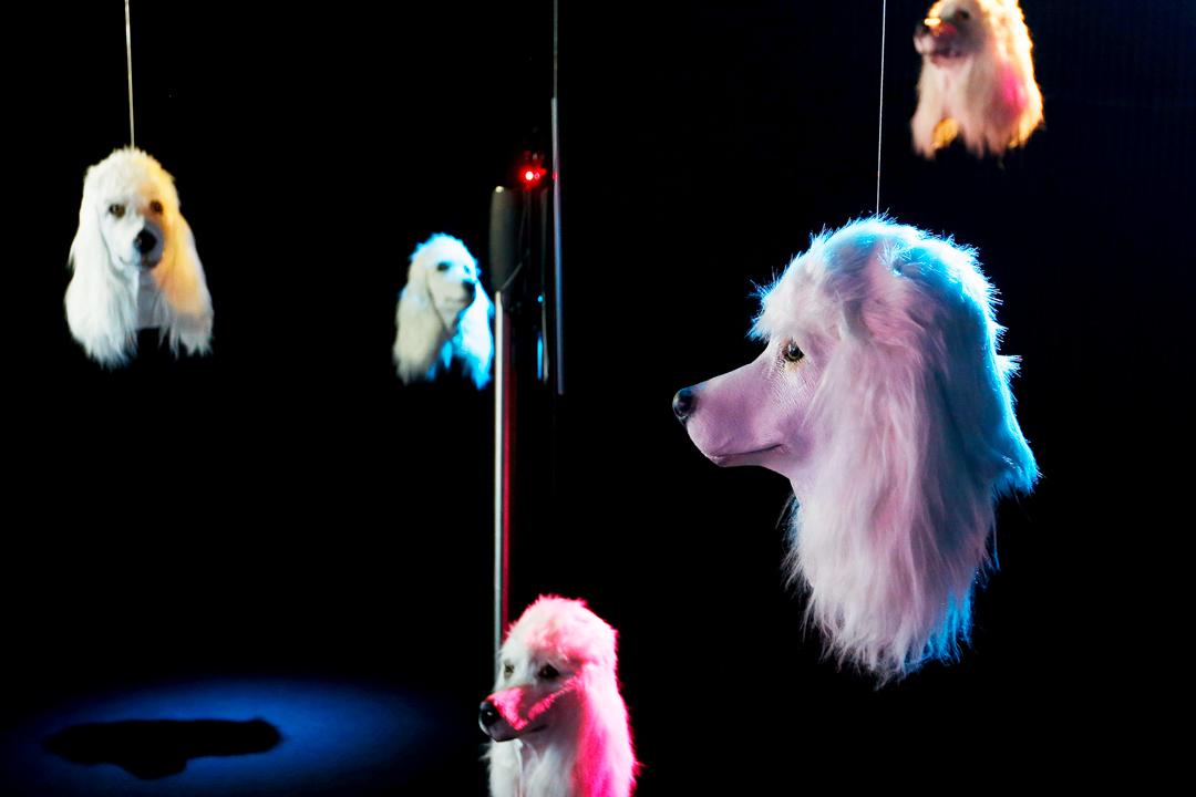 2017年7月3日,在德國法蘭克福錫恩美術館,展出了由英國藝術家Heather Phillipson所設計的人工狗頭裝置藝術品。這個藝術裝置名叫「100 % Other Fibres」,是美術館一個名為「和平」的展覽的其中一部分。展覽在上星期正式向公眾開放。