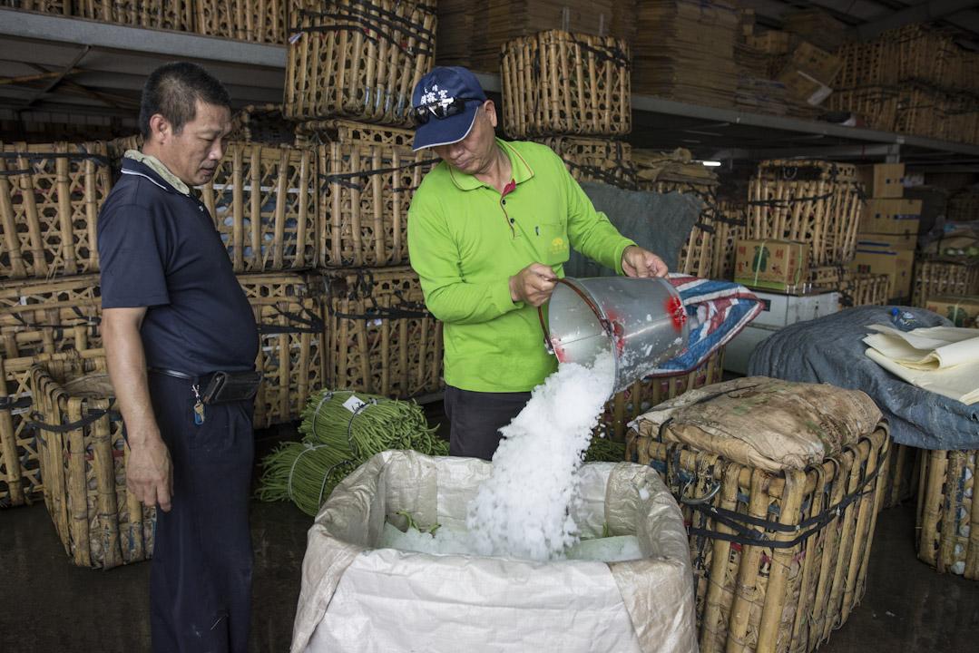 工作人員將碎冰倒入,以保持菜豆新鮮度