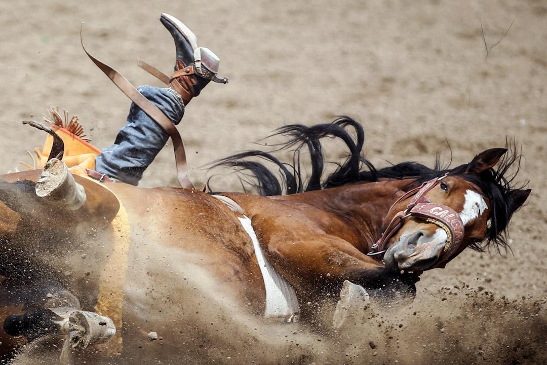 2017年7月9日,在加拿大卡加利,來自美國加州的騎師Clayton Biglow在表演騎術期間,馬匹突然翻側,於是拚力繫緊馬鞍。