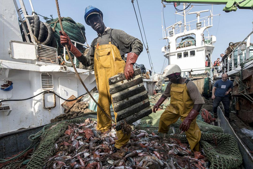西非海域上,非裔漁民在西班牙拖網漁船RELEIXO捕魚。
