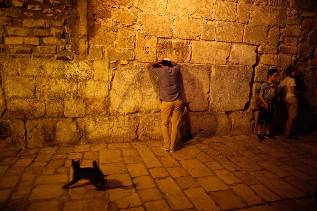2017年7月31日,在耶路撒冷舊城區,一名猶太人向著哭牆祈禱,旁邊有一隻小貓走過。