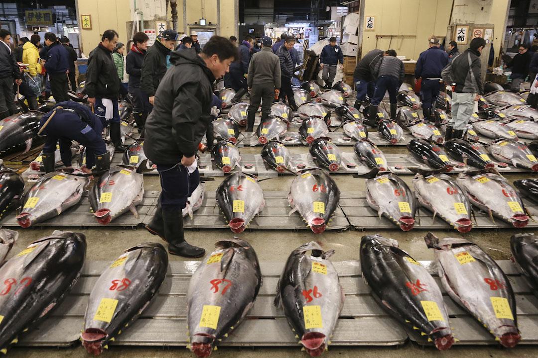 日本東京的築地市場,顧客在漁市場選購新鮮的吞拿魚。