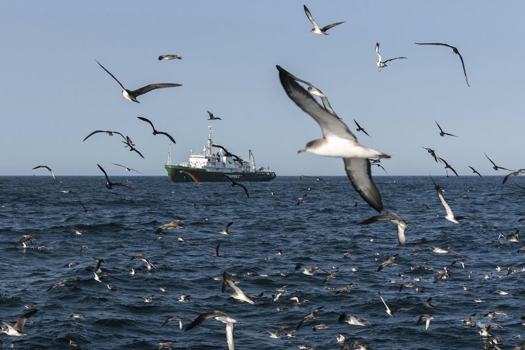 綠色和平的「希望號」在西非海域巡邏,監察在那裡非法捕撈的情況。 攝:Pierre Gleizes / Greenpeace