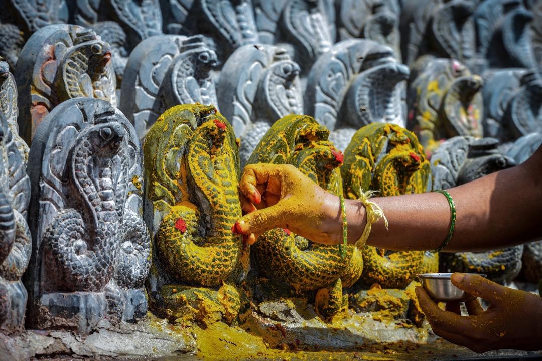 2017年7月28日,在印度班加羅爾,一名印度教信徒為蛇神石俑塗上薑黃色染料。