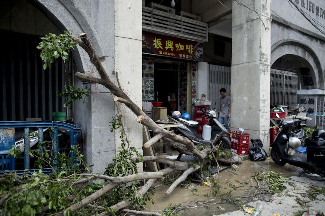 2017年8月24日,澳門街道上一棵樹遭颱風「天鴿」吹倒塌下。 攝:林振東/端傳媒