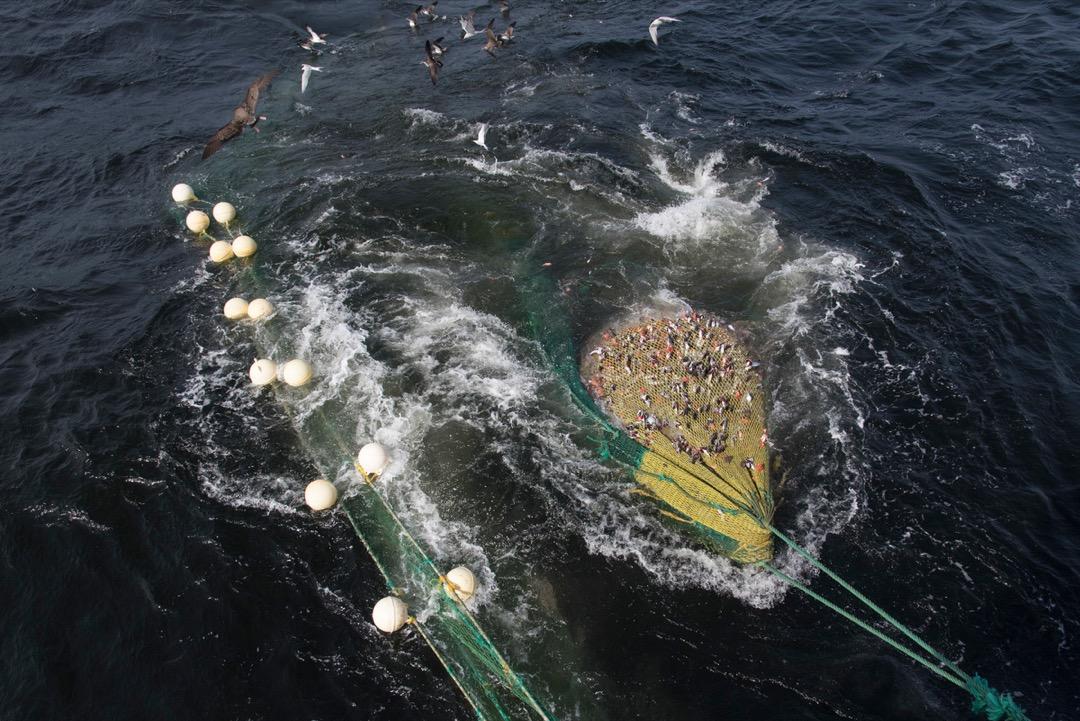每次收網,隨著船長與船副的吼叫指揮,漁網收上的速度越來越快,終於,在魚線的盡頭出現了巨大、溼淋淋的漁獲。