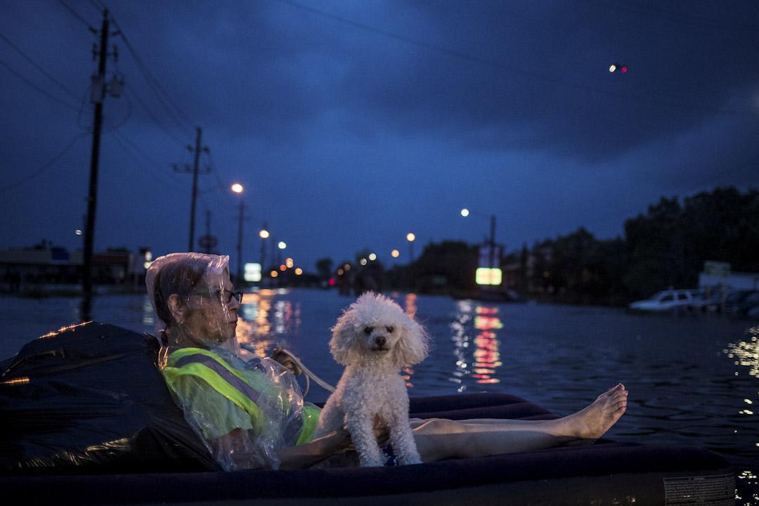 2017年8月27日,美國德州侯斯敦遭遇13年來最強的颶風,多處地方被洪水淹沒,一名婦人與貴婦狗坐在充氣床墊上等待直升機救援。